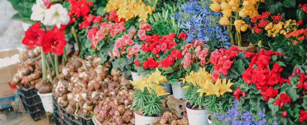 florists-in-hernebay